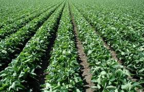 Gremios de Portuguesa impulsan producción de semilla de Soya